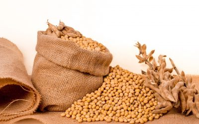 A Detailed Information of Soyabean Cultivation